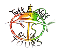 Tuff E Nuff | Eco Dive Shop and Tours Belize | Bird Watching