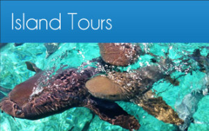 tours-button-island-tour